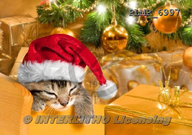 Marek, CHRISTMAS ANIMALS, WEIHNACHTEN TIERE, NAVIDAD ANIMALES, photos+++++,PLMP6997,#XA# cat  santas cap,