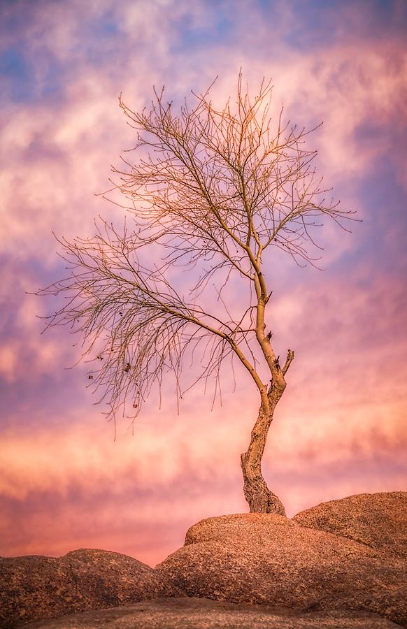 sunset, tree, watson lake