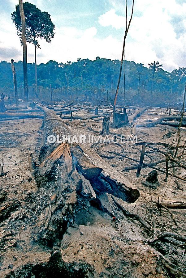 Floresta queimada na Amazônia, Pará. 1999. Foto de Juca Martins.