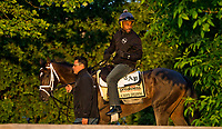 BALTIMORE, MD - MAY 14: Kentucky Derby winner Always Dreaming works out on the track after exercising in preparation for the Preakness Stakes next week at Pimlico Race Course on May 14, 2017 in Baltimore, Maryland.(Photo by Scott Serio/Eclipse Sportswire/Getty Images)