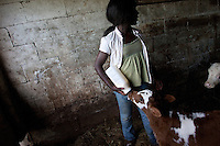 Melody Estrella, 12, feeds milk to Eva, a one day old calf, three times a day at the Estrella Family Creamery in Montesano,Wash.  on November 4, 2010.  The Food and Drug Administration ordered the Estrella Family Creamery in Montesano,Wash.  to stop processing cheeses after it found listeria bacteria on some of the cheeses this year.  The family says they have made many renovations on the farm and the bacteria is only found on the soft cheese, not everything.  They believe they should be allowed to resume making cheese and sell the hard cheeses they have already made at the facility.  The creamery is one of Washington's most famous artisan cheesemakers.  (photo credit Karen Ducey). .