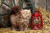Xavier, ANIMALS, cats, photos, SPCHCATS694,#A# Katzen, gatos