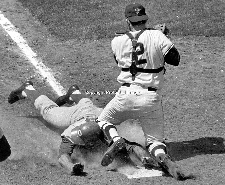Cincinnati Reds Pete Rose is safe at home beating the tag of San Francisco Giants catcher Dick Dietz..(1969 photo/Ron Riesterer)