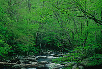 The Middle Prong of the Little River flows through a spring forest, Great Smoky Mountains National Park, Tennessee