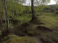 FOREST_LOCATION_90068