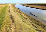 Landscape at high tide Barthorp's Creek, Hollesley Bay, near Shingle Street, Suffolk, England, UK