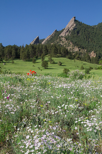 Spring at Chautauqua Park, Boulder, Colorado, USA .  John leads private photo tours in Boulder and throughout Colorado. Year-round Colorado photo tours.