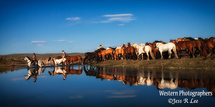A photo of cowboys and cowgirls gathering ranch horses off of the range. Cowboy Photos, riding,roping,horseback