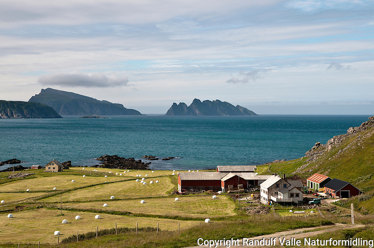 Gårdsbruk i Gamvika på vestsiden av Sørøya. ---- Farm in Gamvika at Sørøya.