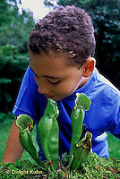 CA18-037z  Pitcher Plant - boy looking into plant
