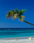 Antigua, West Indies  <br /> Palm tree extends over white sand beach and calm blue waters at Long Bay