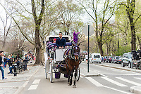 New York, NY - 31 March 2016 -A Bay Carriage horse leaving Central Park ©Stacy Walsh Rosenstock