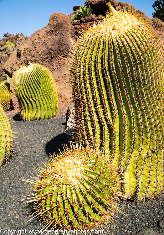 Cactus plants inside Jardin de Cactus designed by César Manrique, Guatiza, Lanzarote, Canary Islands, Spain
