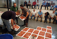Asta del pesce. Fish auction sale.