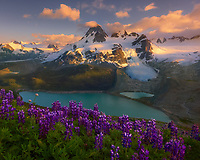 A patch of wild lupines frames Mt. Jacobsen and its glacier lake during a colorful sunset, shot from atop a ridge of lush meadows across the valley below.