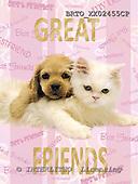 Alfredo, ANIMALS, dogs, photos+++++,BRTOXX02455CP,#a# Hunde, perros