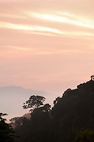 Sunrise view from a hilltop in Nyungwe National Park, Rwanda