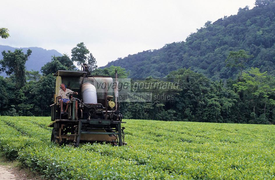 """Océanie/Australie/Queensland/Env. de Mossman: Plantation de thé """"The Daintree Tea Compagny"""" - Récolte mécanique du thé"""