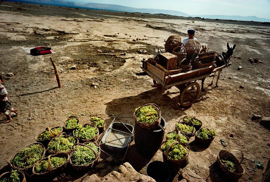1995..An Uighur farmer carries on a cart the grape harvest in osier baskets in Turpan...Un paysan ouighour transporte en charrette la rE.colte de raisins dans des paniers en osier . Turpan.