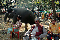 Owners of elephants sitting with their rifles at Sonepur fair ground. They carry weapon to protect the animals from possible sabotage and theft. Bihar, India, Arindam Mukherjee.