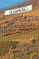 Sign painted black on white E Guigal. Terraced vineyards in the Cote Rotie district around Ampuis in northern Rhone planted with the Syrah grape. Ampuis, Cote Rotie, Rhone, France, Europe