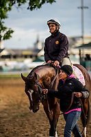 LOUISVILLE, KY - MAY 03: Paradise Woods, owned by Herman Sarkowsky and Martin J. Wygod and trained by Richard E. Mandella, with with exercise rider Alex Bisono aboard walks out to the track at Churchill Downs on May 03, 2017 in Louisville, Kentucky. (Photo by Alex Evers/Eclipse Sportswire/Getty Images)