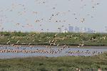 Shorebirds at Hayward Regional Shoreline