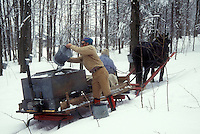 maple syrup, sleigh, winter, Cabot, VT, Vermont, People gathering sap at Carpenter Farm using horse and sleigh at sugaring time in early spring in Cabot. Pouring sap from buckets into storage tanks.