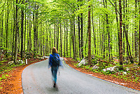 Lake Bohinj, tourist walking in a pine forest, Triglav National Park, Julian Alps, Slovenia, Europe
