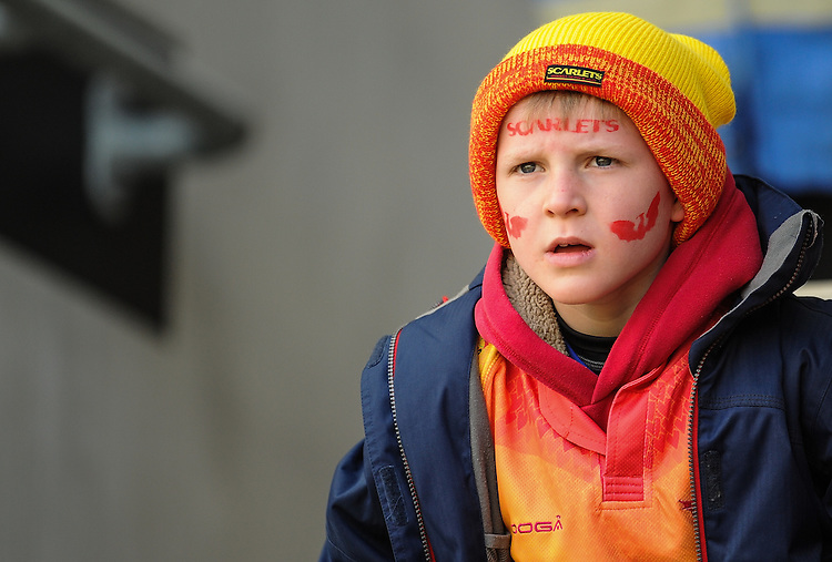A Scarlets fan fans before todays game with Glasgow Warriors<br /> <br /> Photographer Craig Thomas/CameraSport<br /> <br /> Rugby Union - Guinness PRO12 Round 20 - Scarlets v Glasgow Warriors - Saturday 16th April 2016 - Parc y Scarlets - Llanelli <br /> <br /> &copy; CameraSport - 43 Linden Ave. Countesthorpe. Leicester. England. LE8 5PG - Tel: +44 (0) 116 277 4147 - admin@camerasport.com - www.camerasport.com