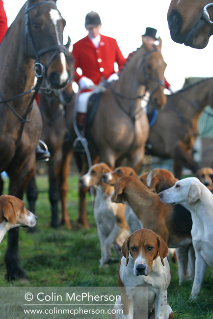 Members of the Wynnstay Hunt gather for a show of strength for their first meet since the ban on hunting with dogs came into force. Around 130 horses rode out with two dogs, staying within the new law. The Wynnstay Hunt, named after Sir Watkin Williams-Wynn, dated back to the 18th century and hunted on country estates in Shropshire, Cheshire and north Wales. Hunting with dogs in England and Wales became illegal on 18th February 2005 despite legal challenges to the ban and many hunts vowed to continue the ancient sport of foxhunting, risking prosecution.