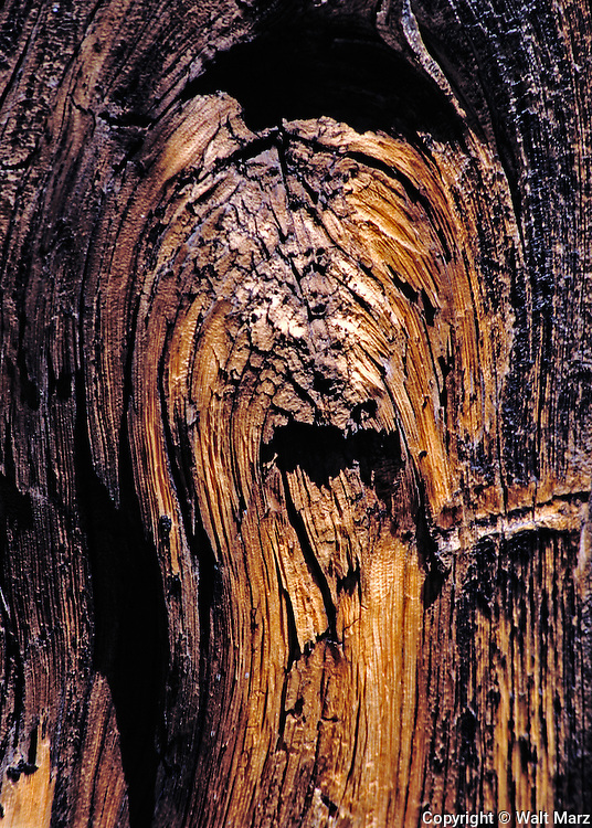 Arizona fence post  that invoked an image of a sheepdog or tiger or . . .