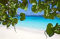 Looking through the seagrape leaves<br /> Honeymoon Beach<br /> Virgin Islands National Park.<br /> St John<br /> U.S. Virgin Islands