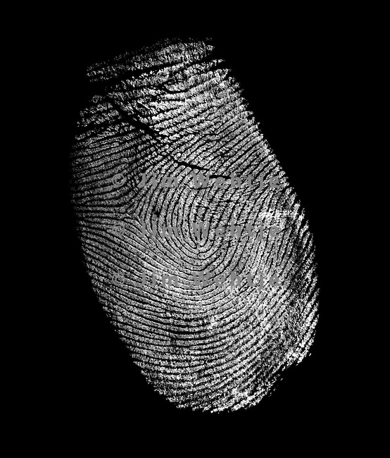 image of a fingerprint (white on black) by Jim Wehtje, specialist in x-ray art and design images.