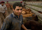 Rising cattle in Argentina by Diego Giudice