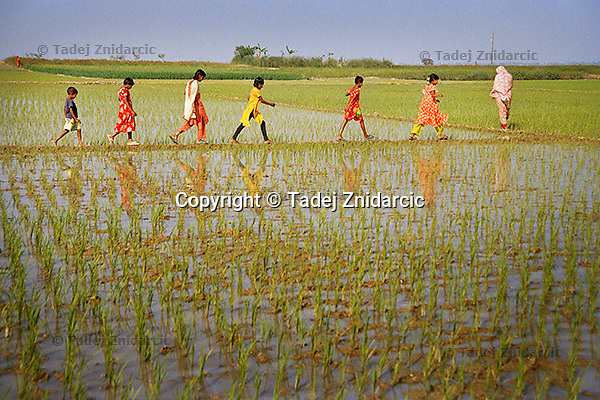 Students from the boat schools cross rice fields close to their village of Kalinagar. Rice is a staple food in Bangladesh and the seasonal floods help wet the land. (Photo by Tadej Znidarcic)