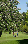 Golfers under the shade of a horse-chestnut tree close to Qualicam beach, Vancouver Island, British Columbia.
