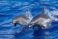 Dolphin Babies