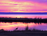 Sunrise on small pond at Summer Lake Inn with iron heron. Oregon
