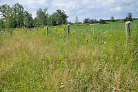 Dennis Rupert Prairie is a 8 hectare (19 acre), located west of Brigden Road between Lakeshore and Michigan. The location is maintained by Sarnia Urban Wildlife Committee..Two threatened prairie species, Riddel's Goldenrod and Sullivant's Milkweed are found in this wet prairie ecosystem. It is one of the last of its kind in Lambton County. The site was named after Dennis Rupert, a local naturalist who first recognized the presence of these rare plants on the property.