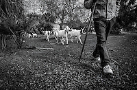 Tom Barnwell raises goats on his property. A leader in the Gullah Geechee community, Barnwell encourages residents to retain their land despite encroaching development, rising taxes and enticing offers from buyers. He helps families clear land titles, write wills and resolve other property-rights issues.