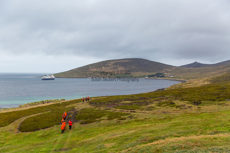 Carcass Island, Falkland Islands