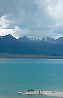 Lake Namtso which is the highest saltwater lake in the world at an elevation of 4870 meters. The snow-covered Mountain range just behind the lake reach over 7500 meters.