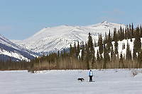 Skijoring along the Koyukuk River, Brooks Range, Alaska.