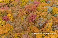 63876-02217 Aerial view of fall color trees Stephen A. Forbes State Park Marion Co. IL