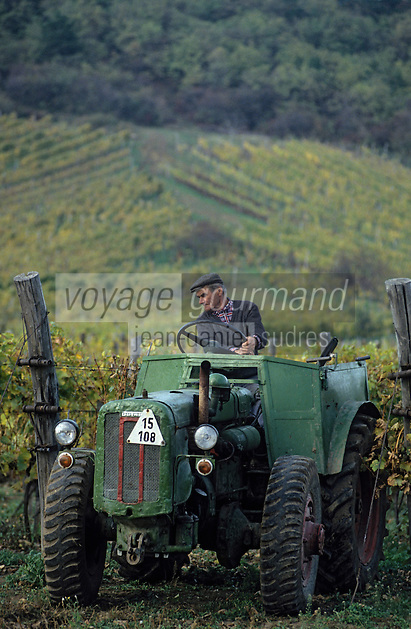 Europe/Hongrie/Tokay/Env Sarospatak/Pajzos: Les vignes - Vigneron et son vieux tracteur russe