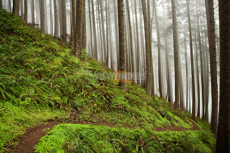 Neakahne Mountain Trail on the North Oregon Coast