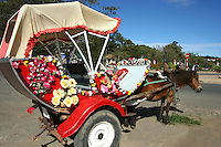 The temperate climate of Dalat is suitable for flowers such as orchids, roses, lilies, and camellias as well as abundant produce shown here at the Dalat Flower Garden.