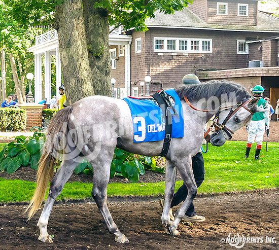 RB Nash before The Arabian Juvenile Championship (grade 3) at Delaware Park on 9/24/16