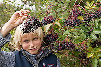 Holunder - Köstliches aus Blüten und Früchten